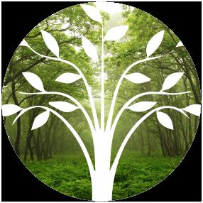 roots development